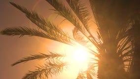 Palm tree leaves - seamless loop. Palm tree leaves in sunshine in the wind - seamless loop stock footage
