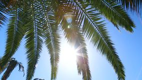 Palm tree leaves shown against sun and blue clear sky, vacation by seacoast. Stock footage stock video
