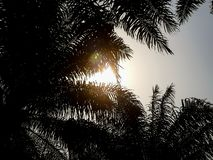 Palm tree leaves silhouetted against the sky, exotic beach sunset scene royalty free stock photos