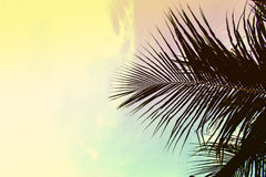 Palm tree leaves on sky background. Palm leaf over sky. Green and yellow toned photo.
