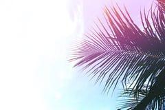 Palm tree leaves on sky background. Palm leaf over sky. Pink light toned photo.