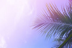 Palm tree leaves on sky background. Palm leaf over sky. Pink and purple filtered photo Stock Photography