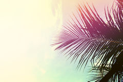 Palm tree leaves on sky background. Palm leaf over sky. Pink and yellow toned photo. Tropical island natural backdrop. Paradise island fantastic template with royalty free stock photography