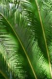 Palm tree leaves. With sunlight Stock Photos