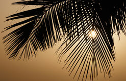 Palm tree leaves at sunrise Stock Photo