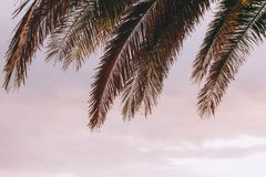 Palm tree leaves in sunset. Tips of palm tree leaves in sunset Royalty Free Stock Images