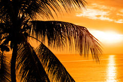 Palm tree leaves in the sunset Stock Image