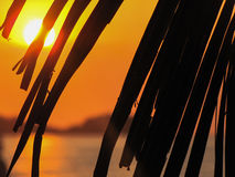 Palm tree leaves at sunset Royalty Free Stock Images