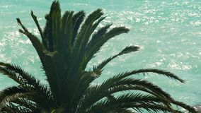 Palm tree leaves swaying in wind with turquoise smashing sea at background. Stock footage stock video
