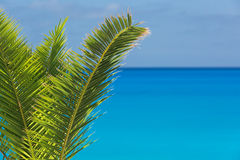 Palm tree leaves on a tropic island, with sea and sky on the background Royalty Free Stock Images