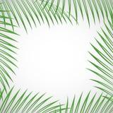 Palm tree leaves Stock Photo
