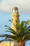Palm tree and lighthouse Royalty Free Stock Photo