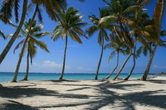Palm Tree lined beach in Punta Cana, Dominican Republic. Palm Tree lined tropical beach in Punta Cana, Dominican Republic Stock Photo