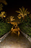 Palm tree lined path at night. Palm tree lined hotel pathway illuminated at night Royalty Free Stock Photos