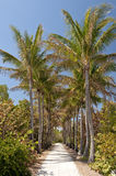 Palm tree lined pathway Royalty Free Stock Photo