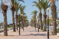 Palm-tree lined promenade Yasmine Hammamet, Tunisia, Africa stock images