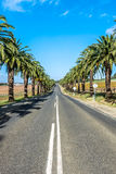 Palm tree lined road Royalty Free Stock Images