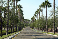 Palm tree-lined street Royalty Free Stock Photography