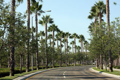 Palm tree-lined street. An empty palm tree-lined street on a sunny day Royalty Free Stock Image