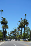 Palm tree lined street. BEVERLY HILLS, CA - AUG 21: Palm tree lined street in Beverly Hills, Ca on Aug. 21, 2013. Beverly Hills is world-famous for its luxurious Royalty Free Stock Images
