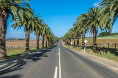 Palm tree lined street Royalty Free Stock Images