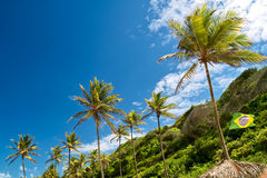 Palm tree lined up, Brazil. Palm tree lined up in a beautiful beach in the brazilian northeast Stock Photo