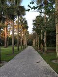 Palm Tree Lined walkway Royalty Free Stock Photos
