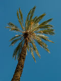 Palm tree. Lonely palm tree illuminated with strong African sun Royalty Free Stock Photo