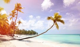 A palm tree with a long trunk in the foreground hangs over the sandy shore. Caribbean coast. Around silence, rest and Paradise. stock images