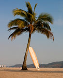Palm Tree and Longboard Stock Images