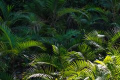 Palm tree, a lot of palms stock photos