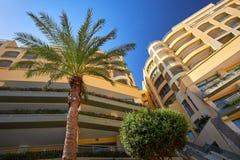Palm Tree in Malta Stock Image