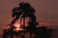 Palm Tree in Maui Hawaii at Sunset Royalty Free Stock Image