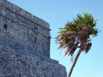 Palm Tree and Mayan Temple at Tulum Stock Photo