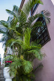 Palm tree. Mediterranean architecture -  town - tenerife - canary island Royalty Free Stock Photo