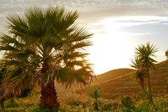 Palm tree in a mediterranean landscape in the evening sun Royalty Free Stock Photos