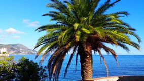 Palm Tree With Mediterranean Sea In Background stock video footage