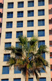 Palm Tree and Modern Building Stock Photo