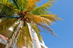 Palm tree and modern building Royalty Free Stock Photography