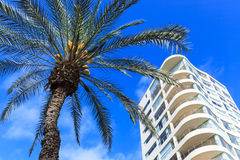 Palm tree and modern building Stock Images