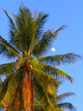 Palm tree with moon. On a tropical beach near sunset royalty free stock photography