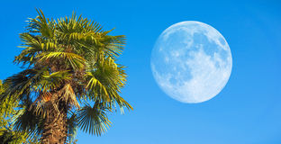 Palm tree with moon stock images
