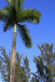 Palm tree and moon. In the sky Stock Photo