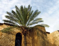 Palm tree Mosque. A palm tree and the walls of a mosque. Nicosia. Cyprus stock photography