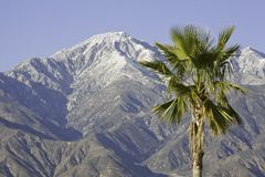 Palm Tree and Mountain Stock Photos