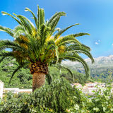 Palm tree. With mountains on the background Royalty Free Stock Photography