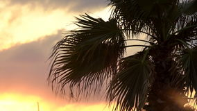 Palm Tree Moving With Wind With Sunset On Background stock footage