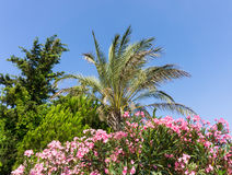 Palm tree nature park wallpaper stock photography