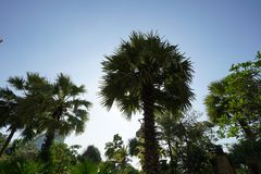Palm tree in nature background royalty free illustration