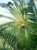 Palm tree near a beach in asprovalta Royalty Free Stock Images